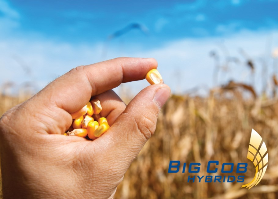 Why Seed Quality is Important to Your Farming Operation