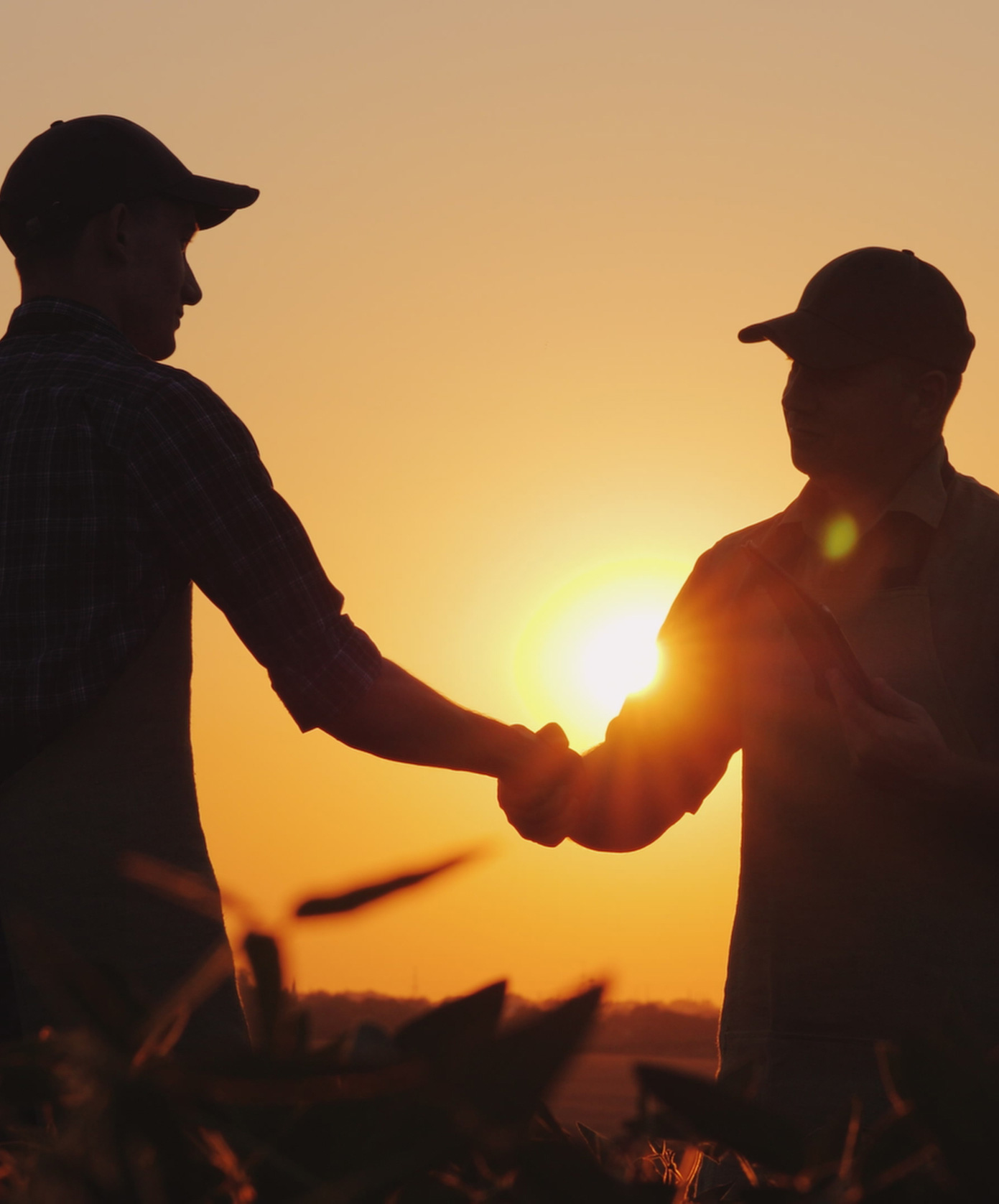 farmers-in-sunset_cropped
