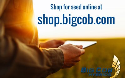Big Cob Hybrids Launches Online Seed Store