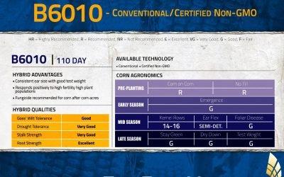B6010 Conventional/Certified Non-GMO Corn Hybrid